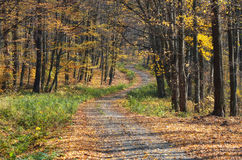 Winding road covered by leaves Royalty Free Stock Images