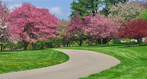 Winding Road And Crabapple Blossoms Stock Image