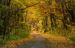 Winding road through dark autumn forest stock photography