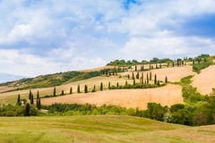 Winding road flanked with cypresses in crete senesi Tuscany, Ita Stock Photo
