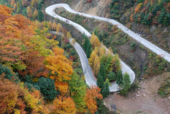 Winding road on hillside. A winding road going up on a hillside in the autumn forest Stock Images