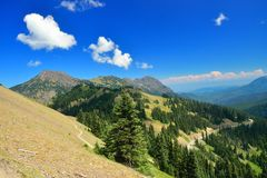 Winding road at Hurricane ridge in Olympic National Park Royalty Free Stock Photo