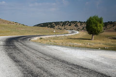 Winding Road And Lone Tree Stock Photo