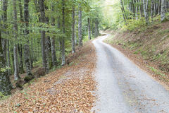 Winding road through Royalty Free Stock Image