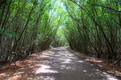 Winding road through the Mangroves, Miami, Florida USA Royalty Free Stock Photography