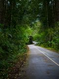 Winding road with nature tree. Tunnel Stock Images