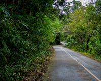 Winding road with nature tree tunnel.  Royalty Free Stock Photo