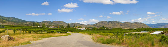 Winding road of Osoyoos Wine Valley Royalty Free Stock Image