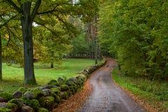 Winding road, autumn park scene Stock Images