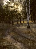 Winding road in a mixed forest royalty free stock photos