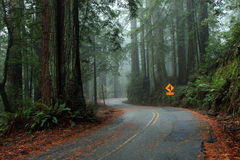 Winding road through the redwoods Royalty Free Stock Images