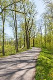 Winding road in spring forest Stock Photo