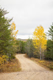 Winding road between spruce trees. A winding road between tall green and yellow trees in the fall Royalty Free Stock Photo