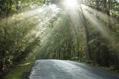 Winding road with sun streaked trees Royalty Free Stock Photos