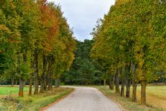 Autumn road alley of trees. Winding road through surrounded by the alley of trees, autumn season Stock Photos