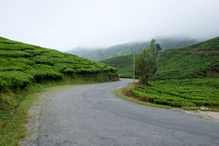 Winding road with tea plantation and fog Royalty Free Stock Photos