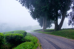 Winding road with tea plantation and fog. At Cameron Highlands, Malaysia Stock Images