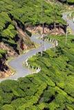 Winding road between tea plantations Stock Image