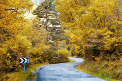Winding Road to forest Stock Photo