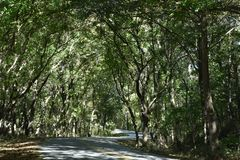 Winding Road to Paradise With Light Rays royalty free stock photography