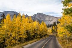 Winding road to Wheeler Peak through autumn colors of yellow asp stock photos