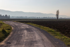 Winding road and tree Stock Photography