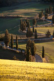 Winding road in Tuscany. Winding road lined by cypress trees in the heart of Tuscany, near San Quirico d'Orcia, Siena royalty free stock image