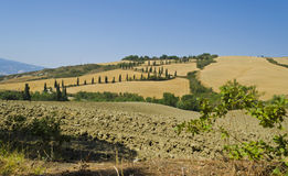 Winding Road in Tuscany - Italy. Typical roads winding roads with cypress in the tuscan countryside Stock Photos