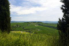 Winding road through tuscany landscape. Seen through cypress trees royalty free stock photos