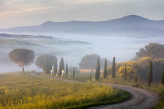 Winding road in Tuscany. Misty morning in Tuscany valley royalty free stock photos