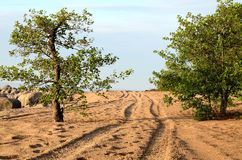 Winding road between two trees. Winding road on the beach Royalty Free Stock Photography