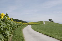 Free Winding Road Up A Hillside Stock Photos - 2789313
