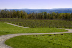 Winding Road in Wine Country Royalty Free Stock Photo