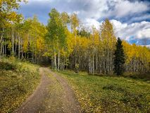 A winding road with yellow aspens royalty free stock photography