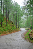 Winding Roads Thru Himalayan Forest Reserve India Stock Photography