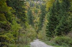 Winding rocky road in the mountains. In Zarnestiului Gorge, a spectacular canyon leading to The Curmătura Cabin, Zarnesti, Romania Stock Photo