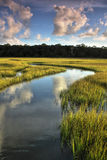 Winding Salt Marsh Royalty Free Stock Photos