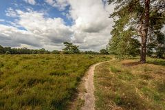 Winding sand path through a nature reserve with heather plants a. Nd pine trees. It is sunny and cloudy day in the Dutch spring season stock images