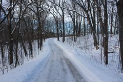 A Snow Covered Road Winds through a Forest. A winding snow covered road through large trees in the winter Stock Images