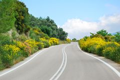 Winding tarmac road with flowers. Winding tarmac road with blooming flowers royalty free stock image