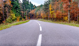 Winding tarred road through autumn trees Stock Image