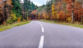 Winding tarred road through autumn trees Stock Image