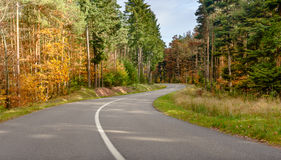 Winding tarred road through autumn trees Stock Photography