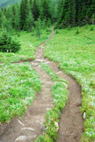 Winding trail on alpine meadow Royalty Free Stock Photo