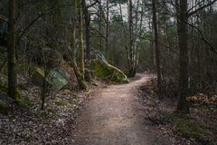 A winding trail in a forest royalty free stock images