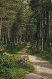 Winding trail in a pine woodland stock image