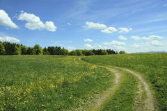 Winding way in buttercup meadow, blue sky with clouds Royalty Free Stock Photo