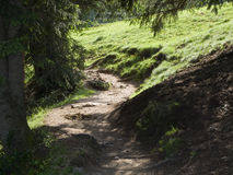 Winding way to the meadow Royalty Free Stock Photo