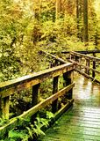 Winding Wood Walkway Through Lush Forest Royalty Free Stock Image