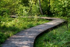 A winding wooden bridge in the forest. A forest path leading across a bridge in a dendrological park. Season of the spring royalty free stock photos